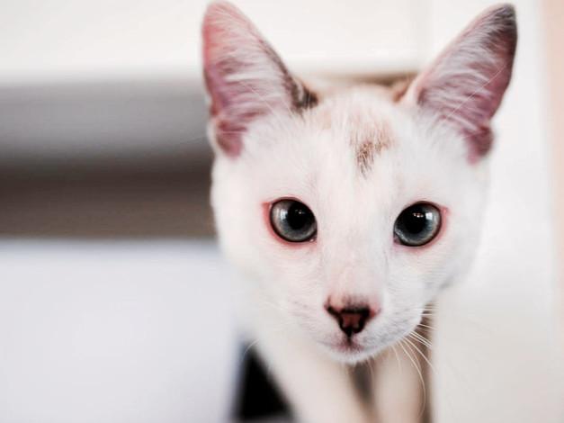 Jaime cat.jpg