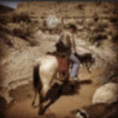 Buckskin gelding on a trail ride in a creek through a canyon