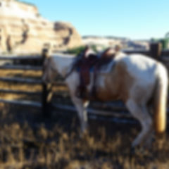 Palomino paint mare ranch horse profile conformation sandstone rock cowhorse