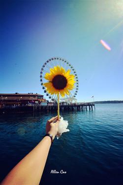 Sunflower, Seattle