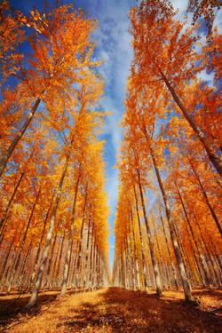 Maple Tree Farm, Boradman