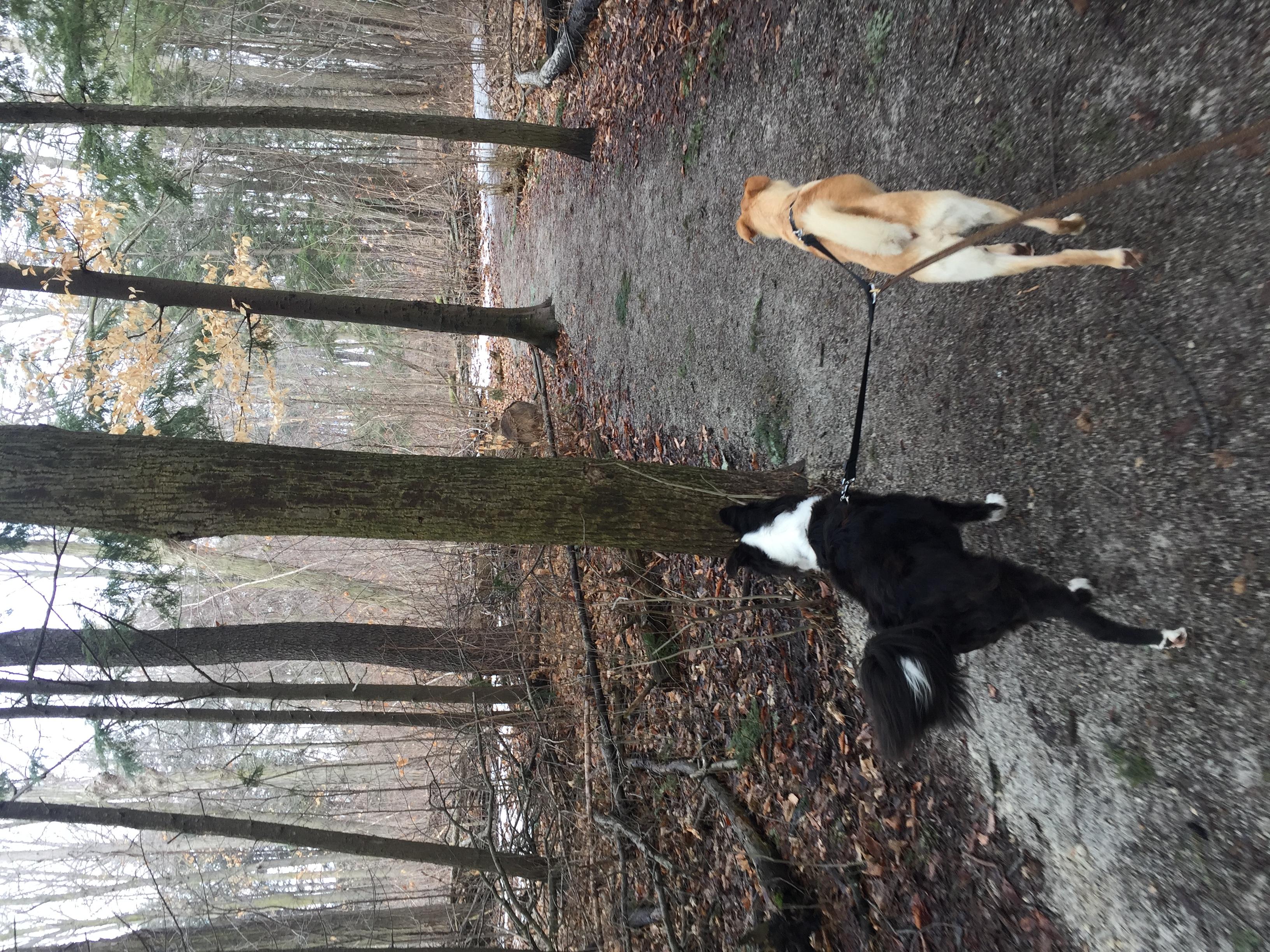 Rosie & Bandit