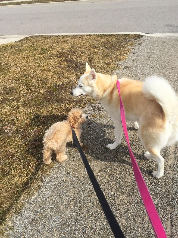 Karma & Maia
