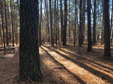 burial woods.jpg
