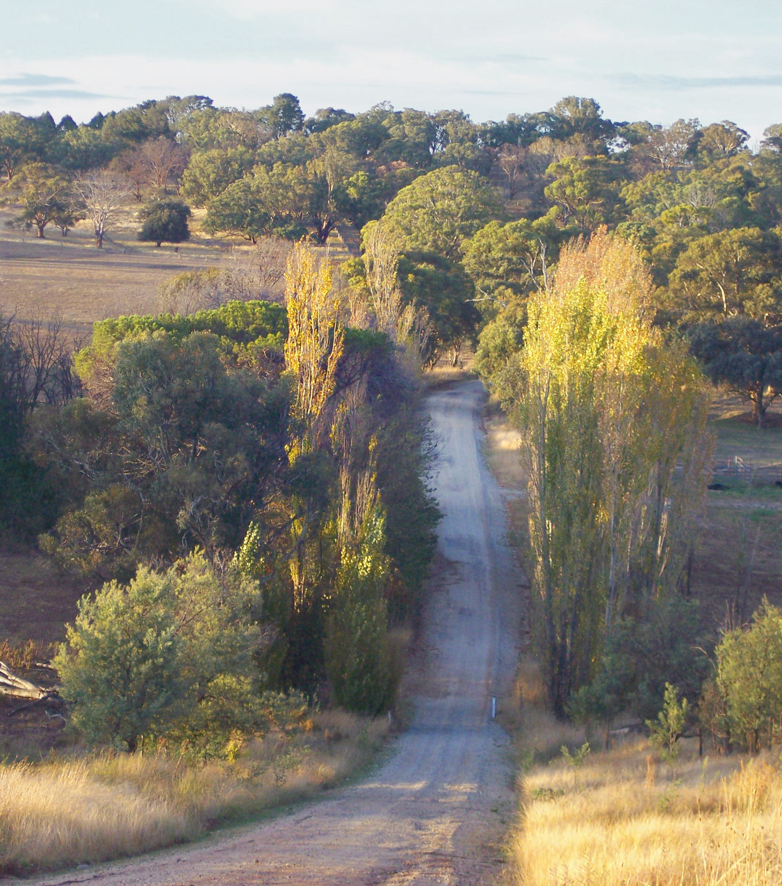 bcarcoar Autumn_edited