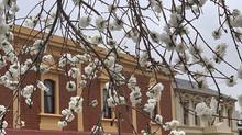 Springtime Revival
