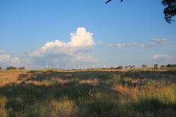 carcoar windfarm