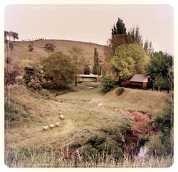 carcoar river sheep original2_edited