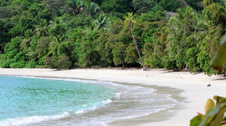 Beach to Jungle