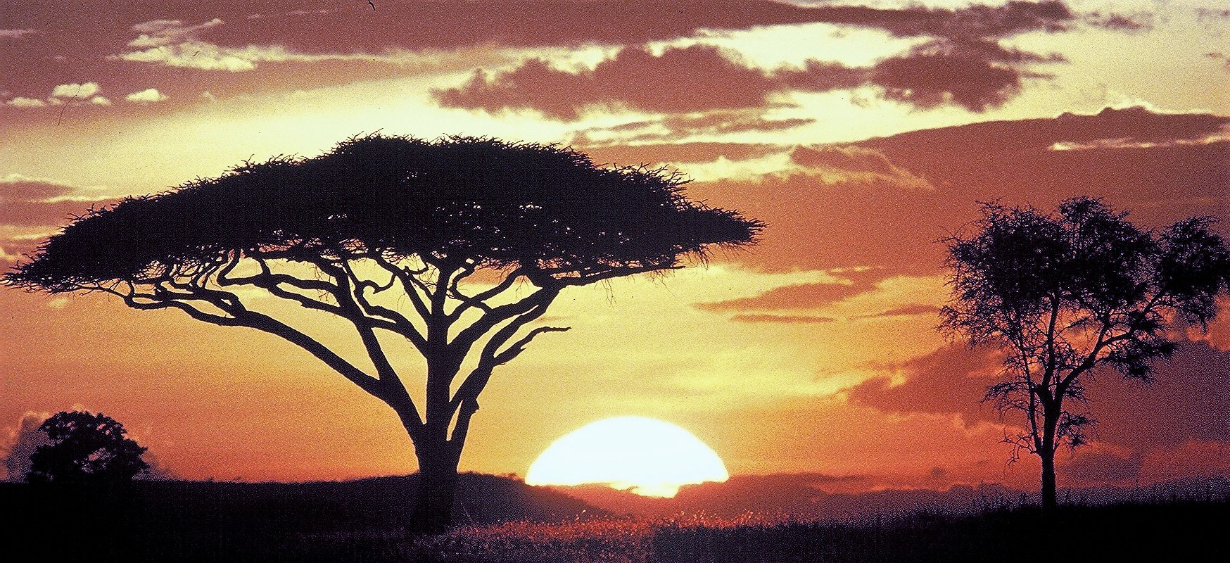 Serengeti-Sunset