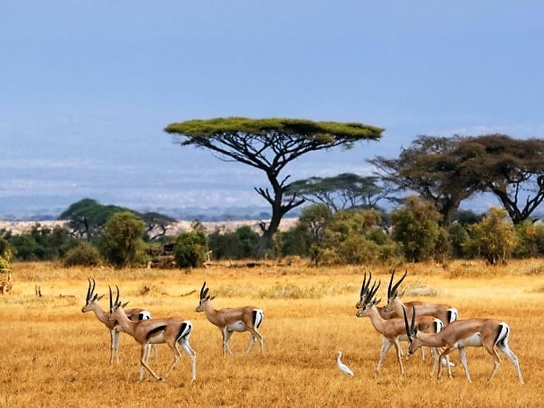On the Serengeti Plain