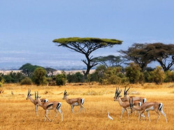 On the Serengeti Plain