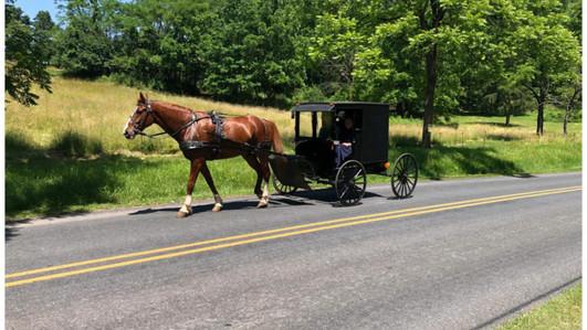 Menonite Horse & Buggy.jpg