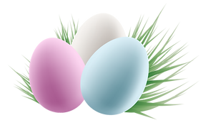 eggs-transparent-background-15.png