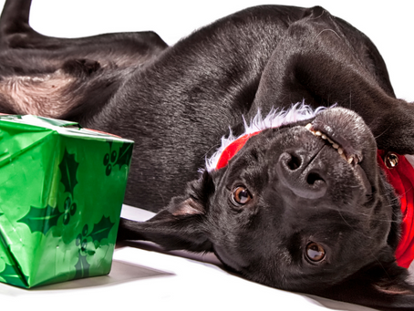 Reducing Your Dog's Holiday Fears