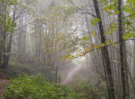 Portland Mindful Woods Walking Group