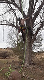 Tree Service 2021 Picture IMG_2565.jpg