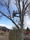 Tree Service 2021 Picture IMG_2563 Climb