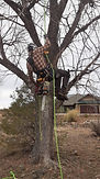 Tree Service 2021 Picture IMG_2566.jpg