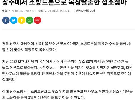 드론전망 / 소방드론으로 목장탈출한 젖소찾아_서울결제 발췌