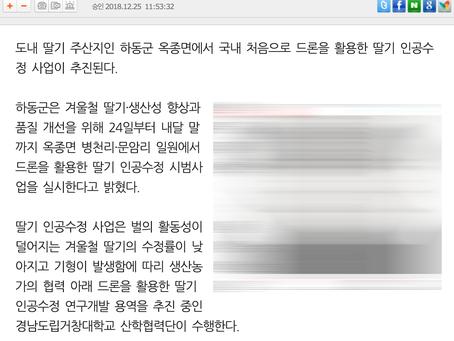 드론전망 / 드론으로 딸기 인공수정_경남일보 발췌