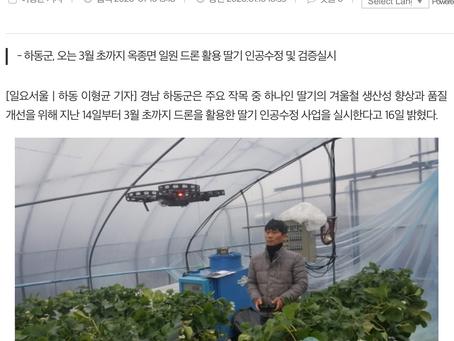 드론전망 / '드론'으로 딸기 인공수정 신기술 효과 검증_일요서울 발췌