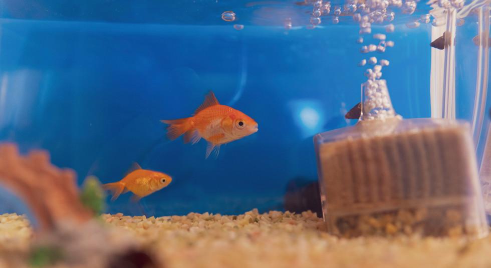 諫早市の工務店スマイフルホームで新築した長崎の注文住宅の金魚