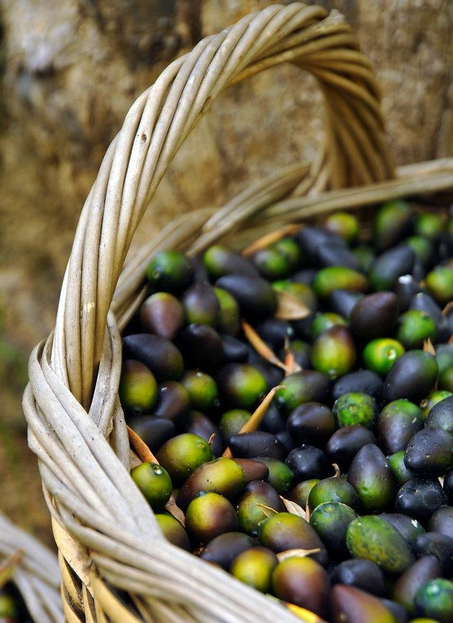 Sparta Olive oil museum