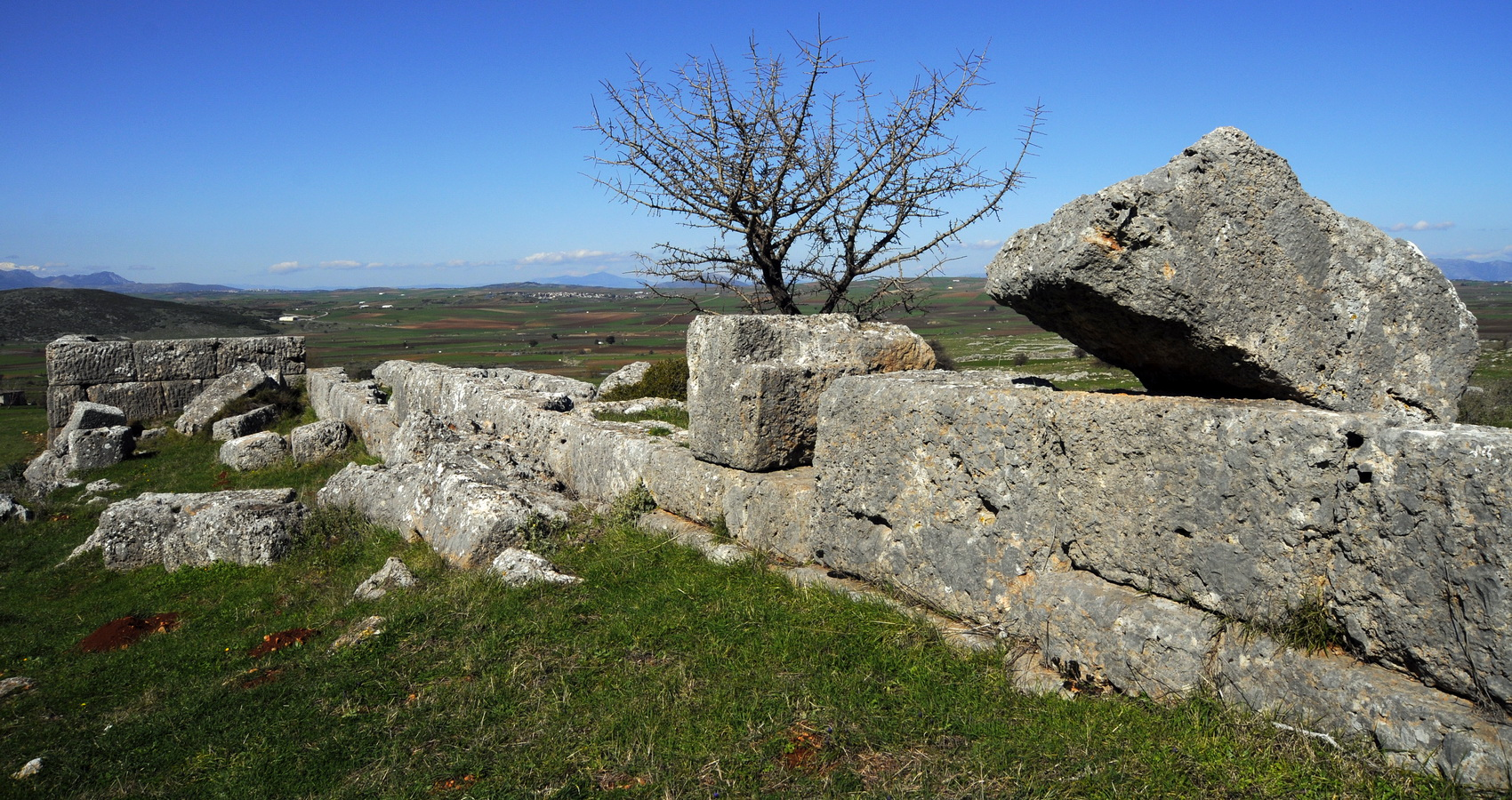 PLATAEAE FIELDS