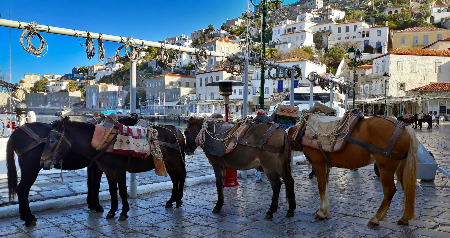 HYDRAS HORSES
