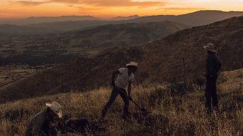 Sunset Cowboys