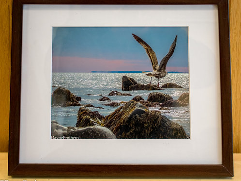 Seagull at Westport Point 8 x 10