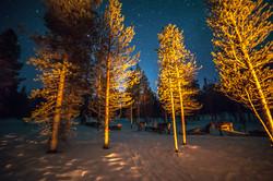 reindeer & forest