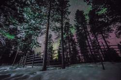 어둠이 내린 숲