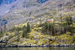 노르웨이 숲