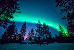 aurora's forest