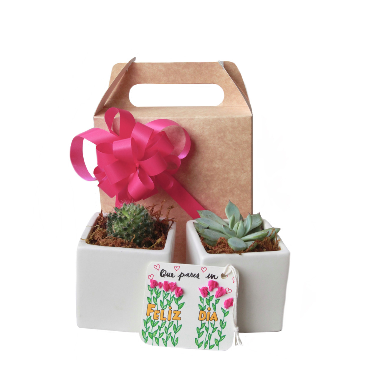 cactus/succulent duo gift set  with white pots + gift tag