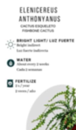 Fishbone cactus.png