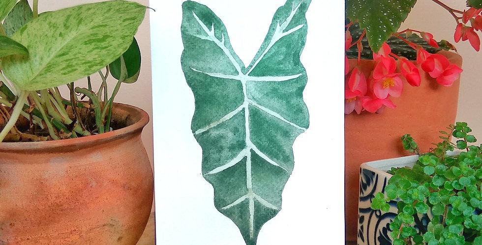 Hand painted art 'Alocasia Amazonica'