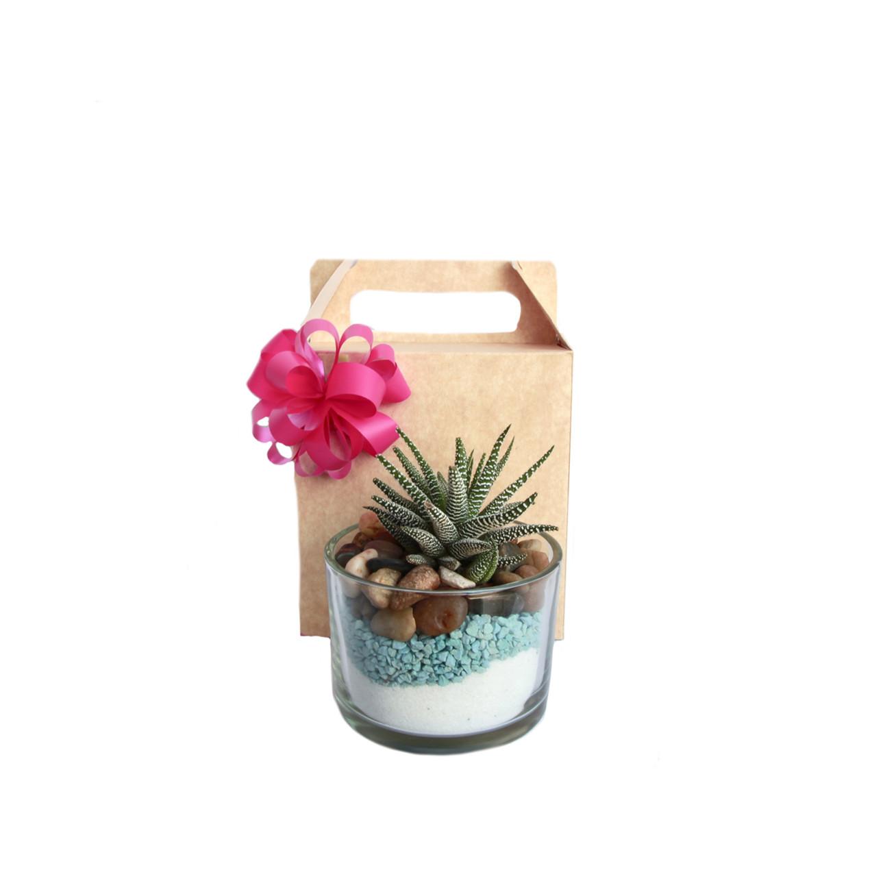 Terrarium  with gift box