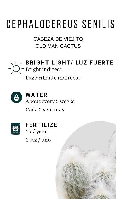 old man cactus.png