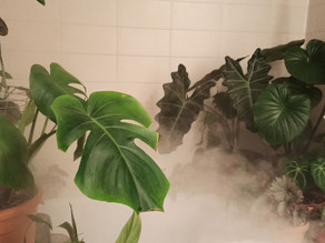 Richard's Plant care tips:  Humidity-Growing Tropical Plants Indoors