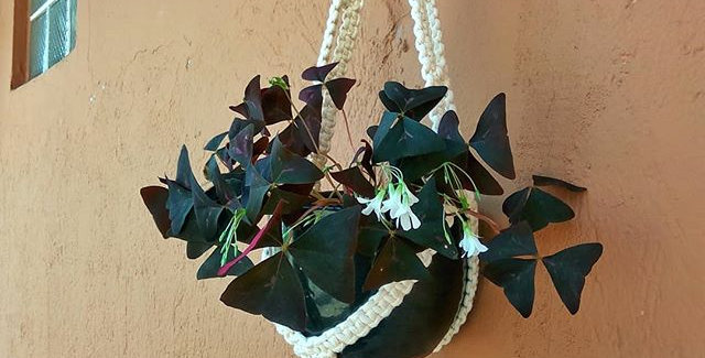 Colgador de planta Macrame 'Java'