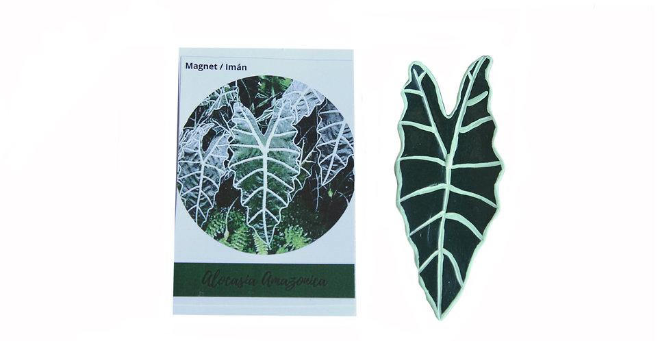 Magnet Alocasia Amazonica
