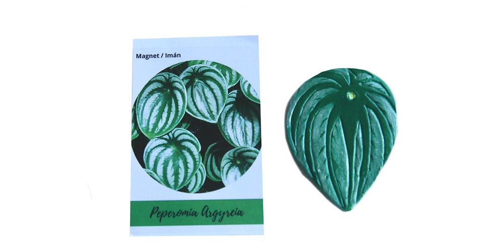 Magnet Watermelon peperomia