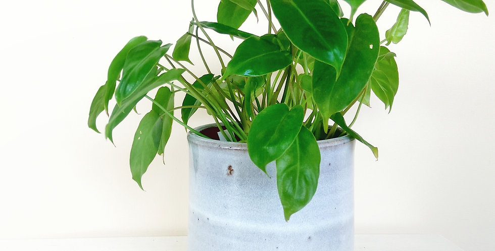 Classic White Cylinder Pot Tall