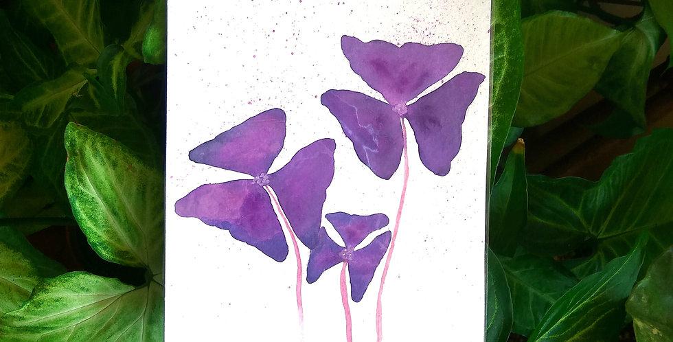 Watercolour art 'Oxalis'