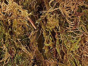 Richard's Plant Care Tips: Propagating with Sphagnum Moss