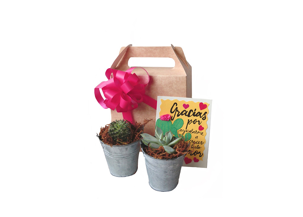 cactus in tin pot with Mother's day greeting card $20