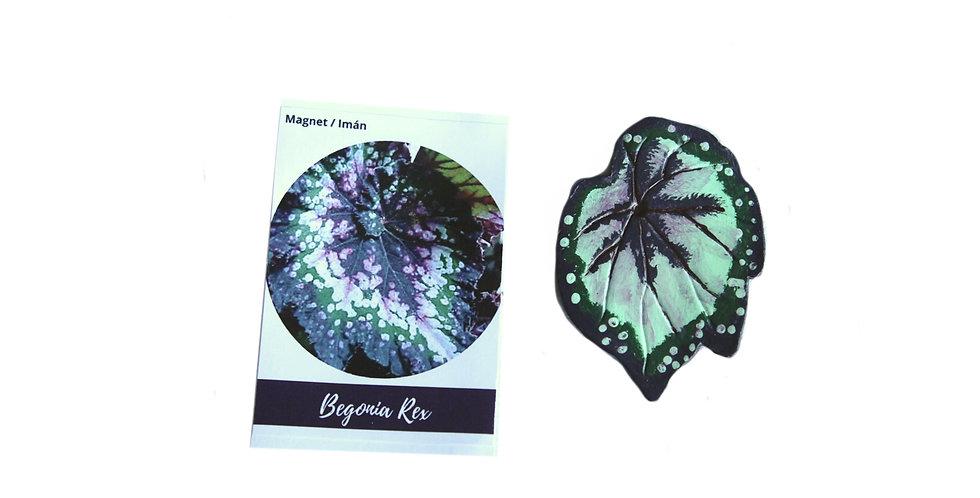 Magnet Begonia Rex